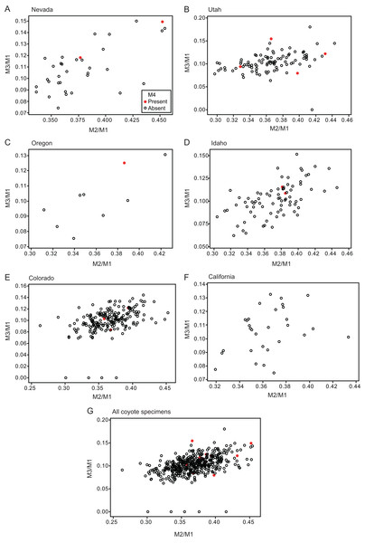 Bivariate plots of M2/M1 and M3/M1 scores among specimens of coyote Canis latrans.