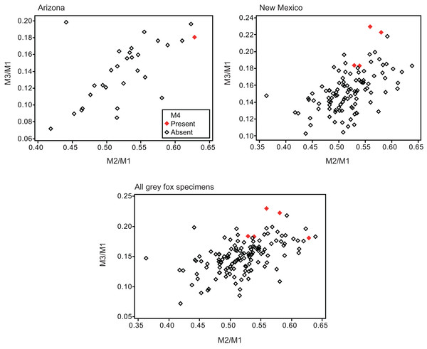 Bivariate plots of M2/M1 and M3/M1 scores among specimens of gray fox Urocyon cinereoargenteus.