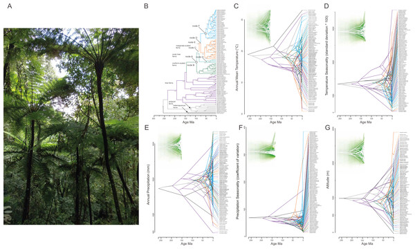Phylogenetic tree for 98 tree fern species using Bayesian inference (A) and traitgrams depicting ancestral climatic preferences and shifts at (B, H) annual mean temperature (BIO1), (C, I) temperature seasonality (BIO4), (D, J) annual precipitation (BIO12), (E, K) precipitation seasonality (BIO15) and (F, L) altitude (x axes) and their underlying phylogenetic relatedness (time from the root; y axis).