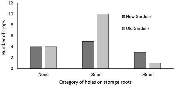 Incidence of pest damage holes in sweetpotato storage roots (n = 10 new and 14 old).