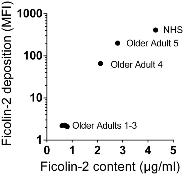 Some older individuals' sera deposit disproportionately little ficolin-2 on serotype 11A bacteria.