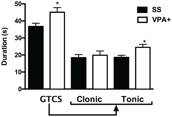 Duration of the generalized tonic-clonic seizure (GTCS) induced by pentylenetetrazole, as well as of its clonic and tonic phases in the subpopulation of rats treated with valproic acid with high seizure susceptibility (VPA+).