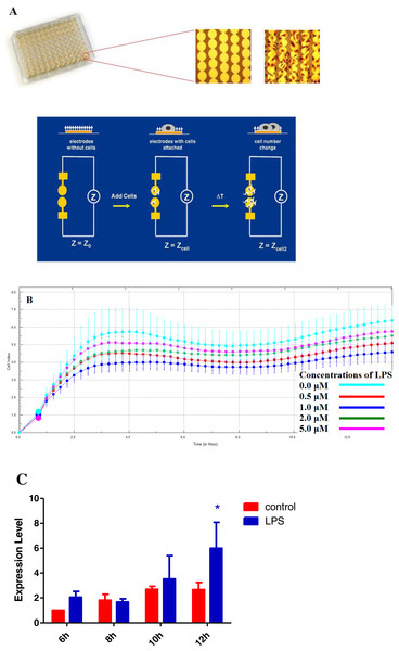 Real Time Cellular Analysis (RTCA) of micro-electrical impedance changes of HPAECs.