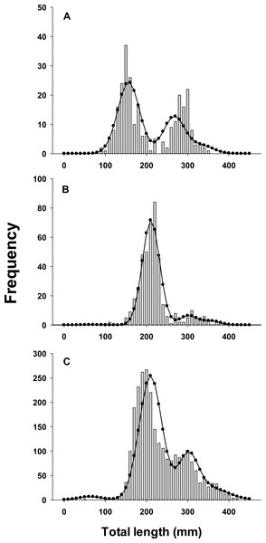 Observed length frequency histograms of lionfish collected from northeast Florida used in model validation.