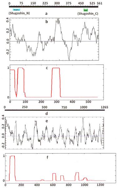 Three parameters of H. sapiens SGOL1 (mitotic) and SGOL2 (meiotic) shugoshins.