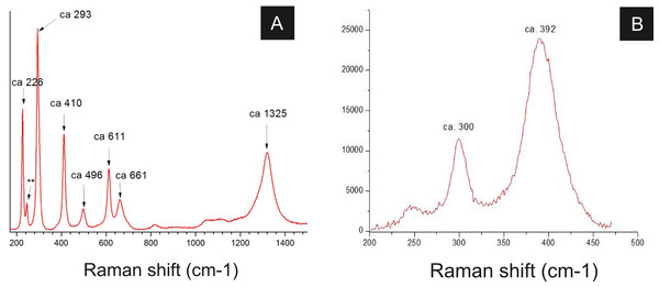 Raman spectra of insect cuticle.