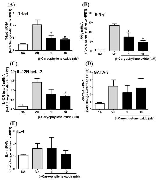 The effect of β-caryophyllene oxide on mRNA expression in OVA-primed splenocytes.
