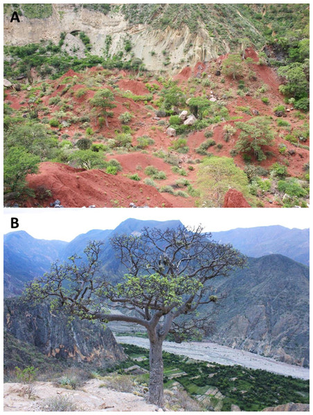 Habitat and localities of the holotype of Tantilla tjiasmantoi sp. nov. CORBIDI 7726 near Laguna de Pías, La Libertad, Peru (A), and male paratype ZFMK 95238 near Santa Rosa de Marcamachay, La Libertad, Peru (B).