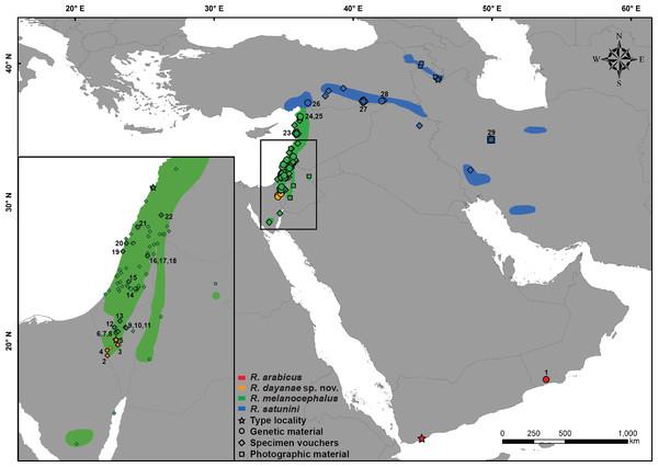 Distribution map of Rhynchocalamus.