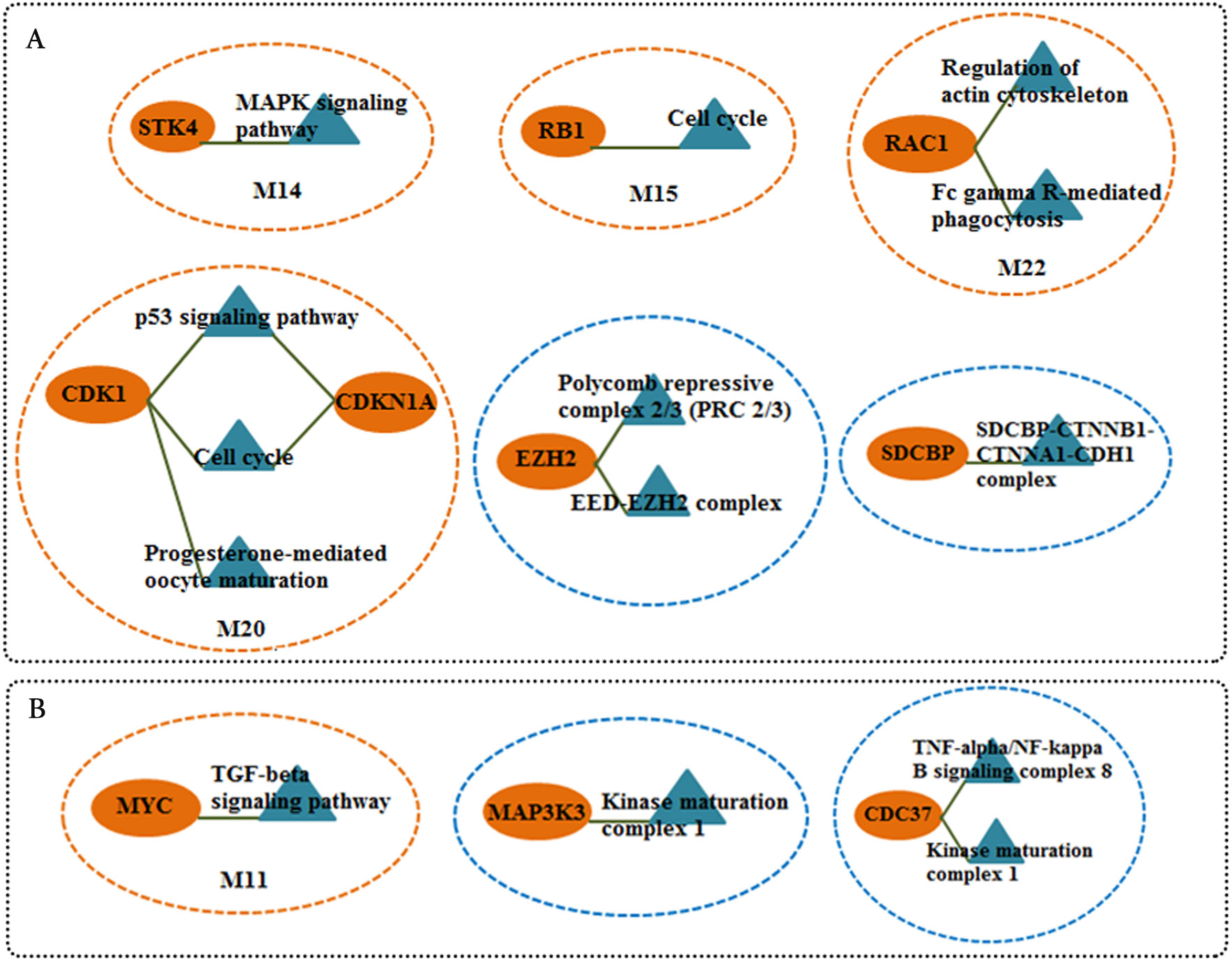 Network Based Analysis Of Differentially Expressed Genes In