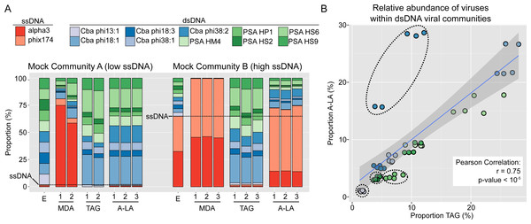 Comparison of amplification efficiency for ssDNA and dsDNA genomes of Multiple Displacement Amplification (MDA), Tagmentation (TAG) and Adaptase-Linker Amplification (A-LA) from mock community samples.