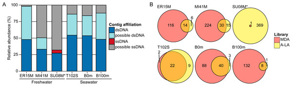 Relative abundance of ssDNA vs dsDNA viruses in freshwater and seawater samples and estimated diversity of ssDNA viruses.