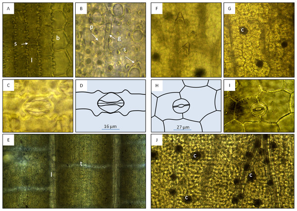 Macroscopic features of bamboo tea products (A–D) and bamboo leaf samples (E and F).