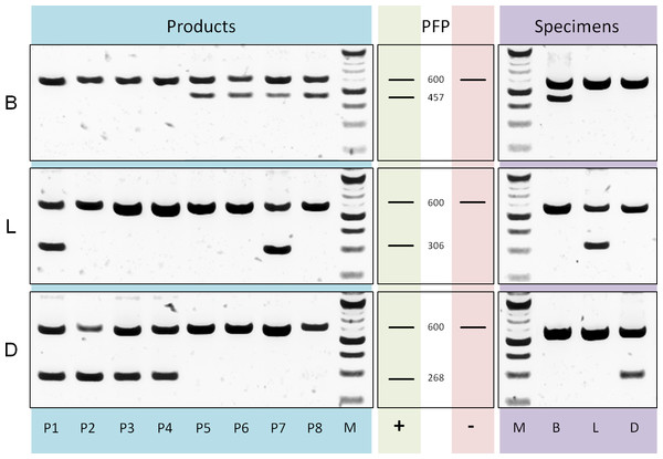 PCR diagnostics.