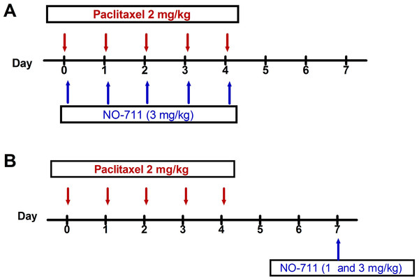 Drug administration schedule for preventative and therapeutic treatment with NO-711 against paclitaxel-induced thermal hyperalgesia and cold allodynia.