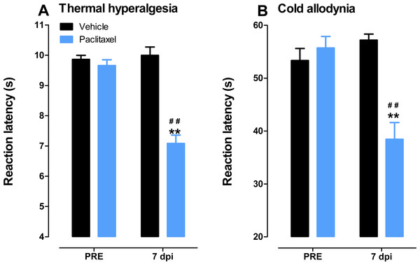Paclitaxel-induced thermal hyperalgesia and cold allodynia in BALB/c mice.