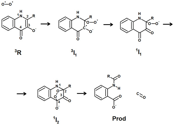 Proposed mechanism for the reaction catalyzed by 1-H-3-hydroxy-4-oxoquinaldine-2,4-dioxygenase.