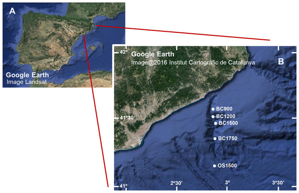 (A) Image of the Iberian Peninsula (Google Earth, Landsat) and (B) enlargement showing the Blanes Canyon with indication of the sampling stations (Google Earth, Institut Cartogràfic de Catalunya).