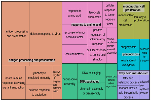 Semantically summarized GO terms.