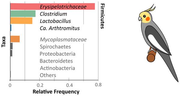 Cockatiel microbiome summary.