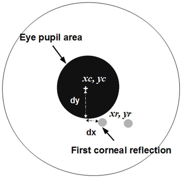 The eye iris and measurements to calculate a gaze point.