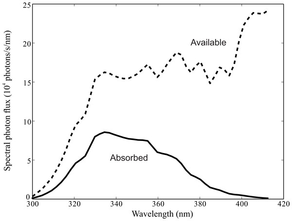 Spectral photon flux delivered by facet lens to tip of R7 rhabdomere, Ri(λ), (dashed line), and photons absorbed by rhodopsin molecules in R7 and R8 (solid line).