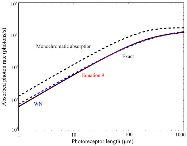 Absorption of blue skylight by UV rhodopsin, NiFa(κ), as a function of length lr.