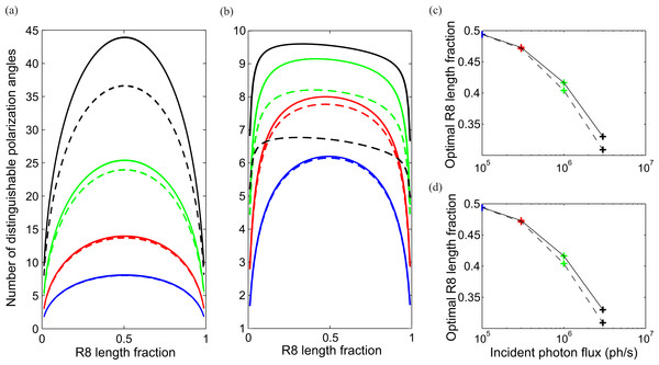 Optimum division of CRP between R7 and R8 maximizes two measures of coding ability, number of discriminable polarization angles and mutual information.