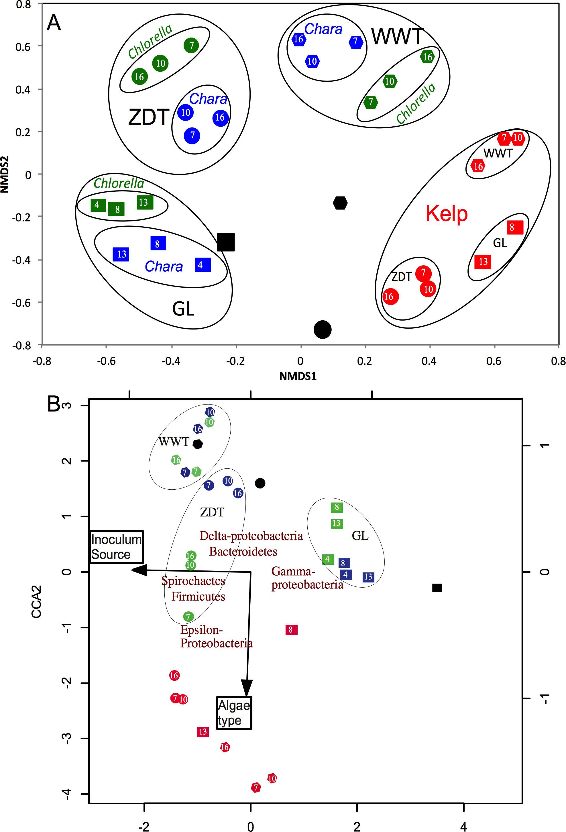 Microbial communities mediating algal detritus turnover