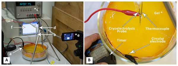 (A) Photograph of experimental system: a, electrode on container surface; b, cryoelectrolysis probe; c, DC power supply; d, thermocouple, e, camera; f, cryosurgery probe pressure monitor; (B) close-up of the gel and electrodes.
