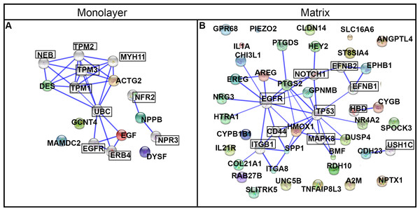 Protein networks predicted by STRING analysis.