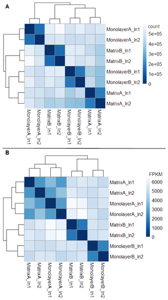 Heat maps of Euclidean sample-to-sample distances and cluster dendrograms of raw RNA-seq alignment count (A) and FPKM normalized data (B).