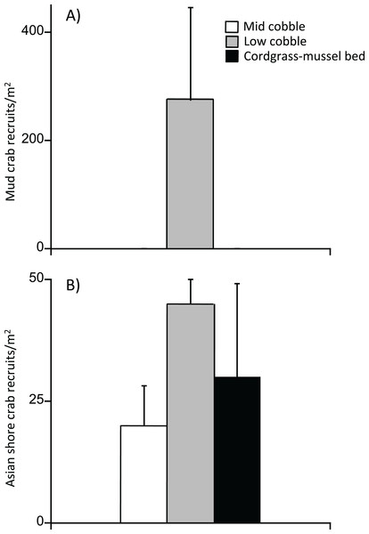 Settlement rates of (A) native mud crabs and (B) invasive Asians shore crabs into mid cobble, low cobble, and cordgrass–mussel bed zones.