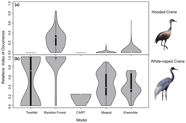 Violin plots of the Relative Index of Occurrence (RIO) for four SDMs and Ensemble model for Hooded Cranes and White-naped Cranes based on satellite tracking data.
