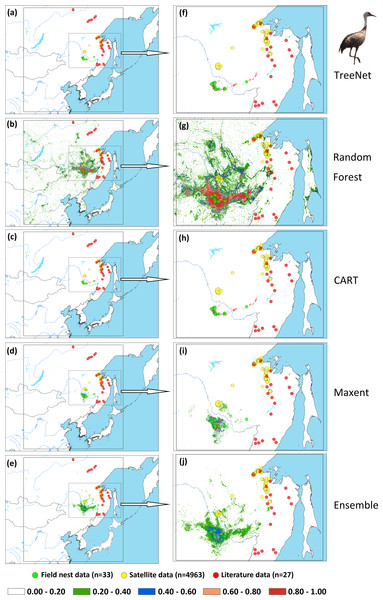 Prediction maps for Hooded Cranes and zoomed-in maps showing the four models (TreeNet, Random Forest, CART and Maxent) and Ensemble model in detail.