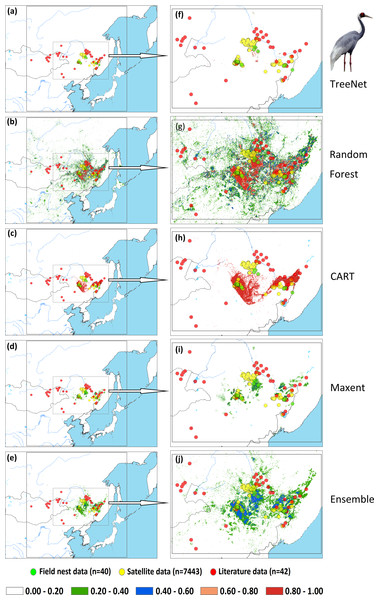 Prediction maps for White-naped Cranes and zoomed-in maps showing the four models (TreeNet, Random Forest, CART and Maxent) and Ensemble model in detail.
