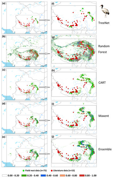 Prediction maps for Black-necked Cranes and zoomed-in maps showing the four models (TreeNet, Random Forest, CART and Maxent) and Ensemble model in detail.