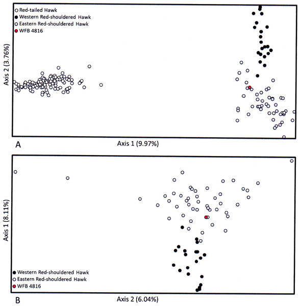 Results of the factorial correspondence analysis (FCA) of microsatellite loci for WFB 4816 (yellow circles) compared to (A) eastern and western Red-shouldered Hawks, and (B) eastern and western Red-shouldered Hawks and western Red-tailed Hawks.