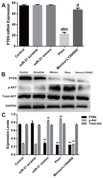 Expression change of PTEN/PI3K/Akt pathway in the process of miR-21 mimics induced proliferation in c-kit+ CSCs.