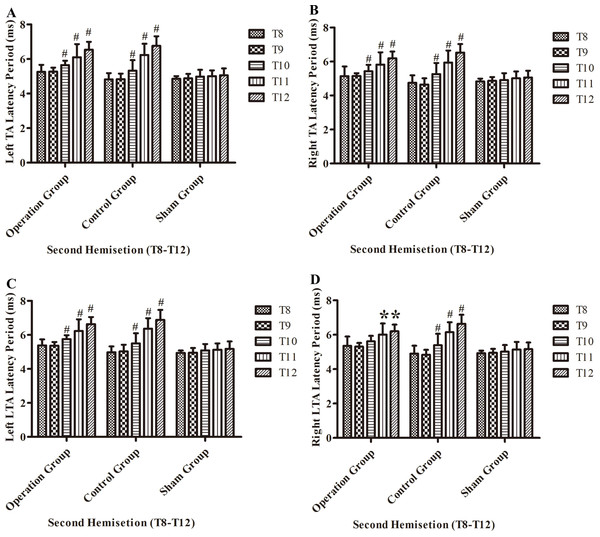 Electrophysiological examinations (MEP, latency periods) of the T8–T12 sub-groups at the body surface in part 2 of this study after the second hemisection operation.