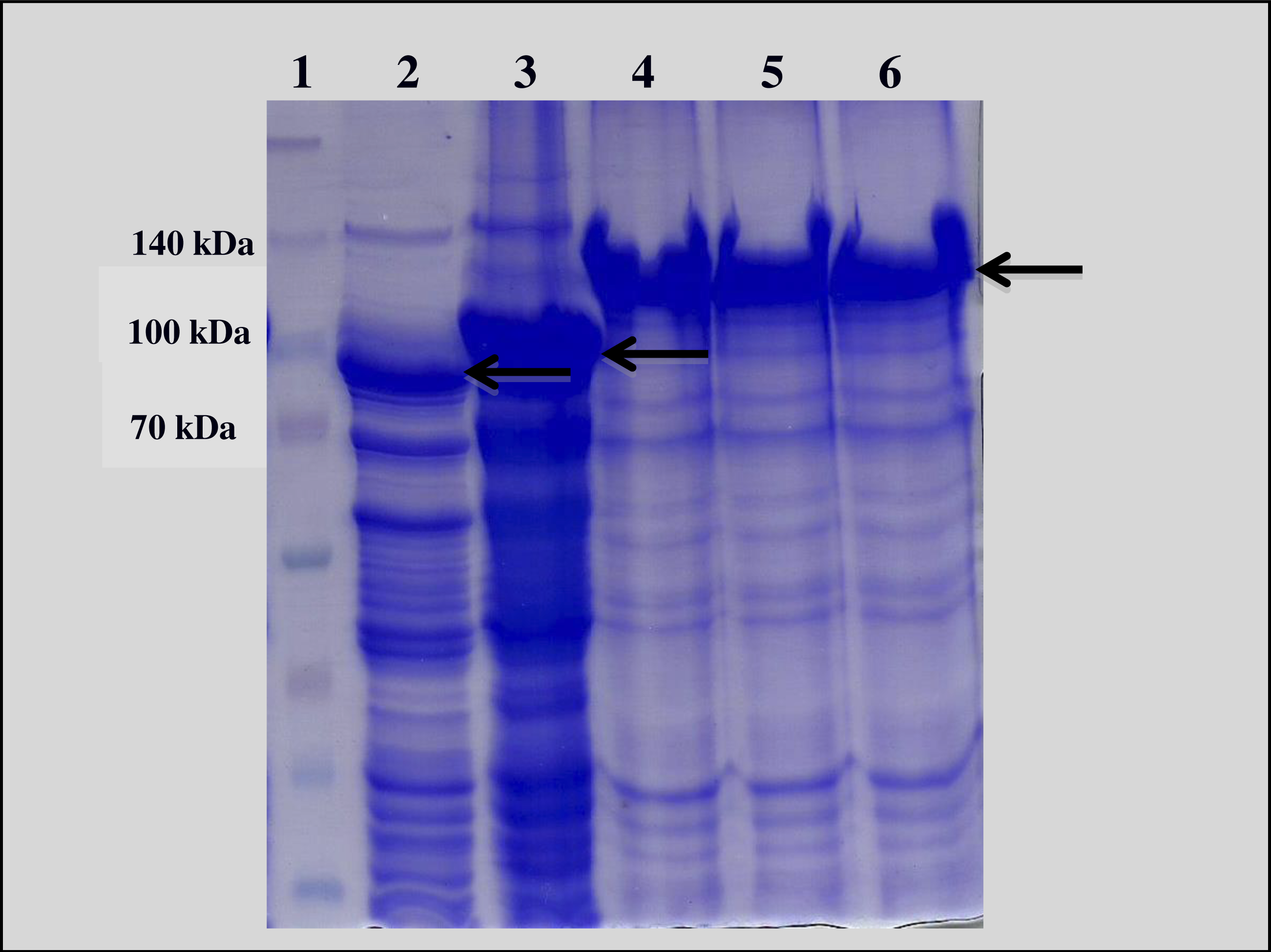 isolation of recombinant escherichia coli iptg Expression, purification and characterization of recombinant plasminogen activator from gloydius brevicaudus venom in escherichia coli (iptg) induction like human tissue pa, the purified renatured rgbv-pa could significantly reduce the rabbit plasma euglobulin lysis time.