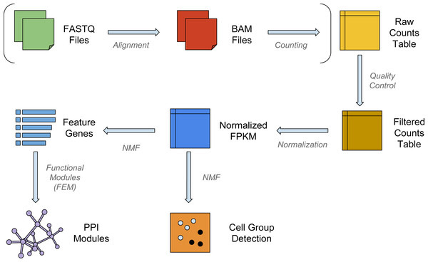 The workflow of NMFEM.