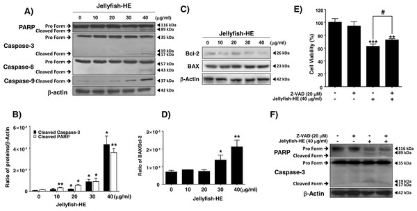 Jellyfish hexane extract induces apoptosis via extrinsic and intrinsic pathways in K562 cells.