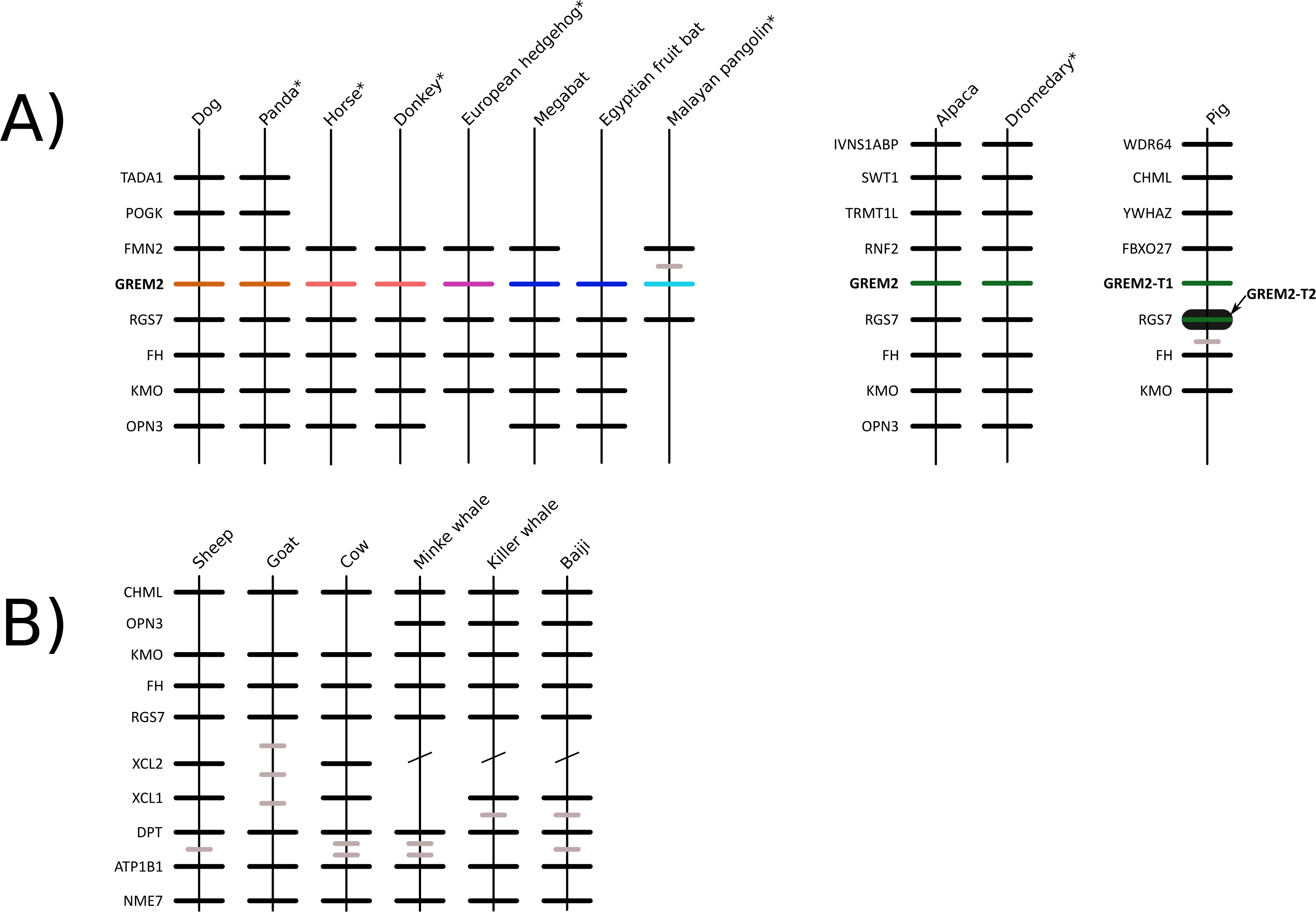 Grlin Timer Wiring Diagram Free Download Trusted Diagrams Amc Gremlin Evolution Of 2 In Cetartiodactyl Mammals Gene Loss Ford Full Size