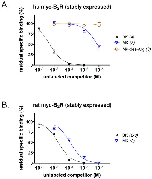 Pharmacology of N-terminally extended BK sequences in HEK 293a cells that stably express recombinant myc-B2R constructions.