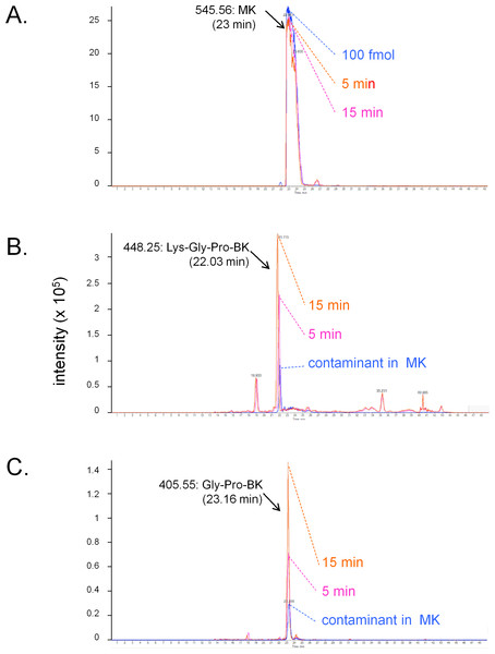 LC-MS determination of C-terminal fragments of MK dissolved in sterile Krebs solution and incubated in the presence of a ring of human umbilical vein at 37 °C for 5 or 15 min.