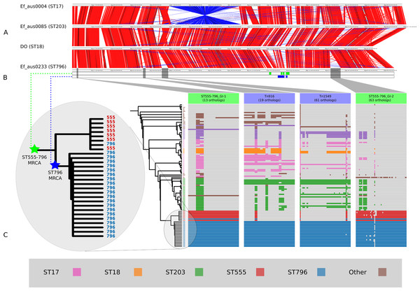 Comparisons of chromosomal architecture, genomic islands and recombining segments associated with the ST555-796 and ST796 clades.