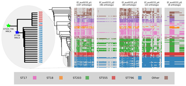 Plasmid gene content comparisons: the presence and absence of orthologs within each of the five plasmids that were identified in the Ef_aus0233 genome.