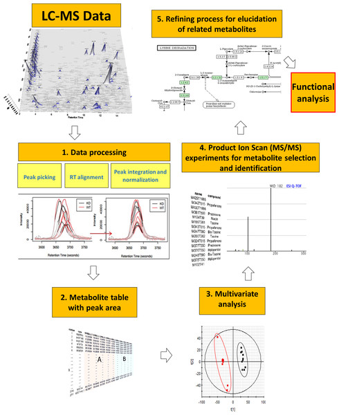 General metabolomics workflow from data acquisition by LC-MS to functional analysis.