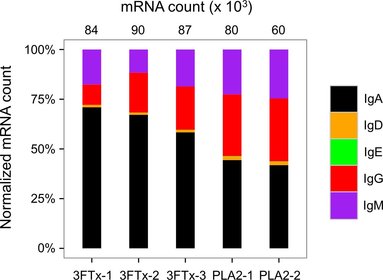 Exploration of immunoglobulin transcriptomes from mice